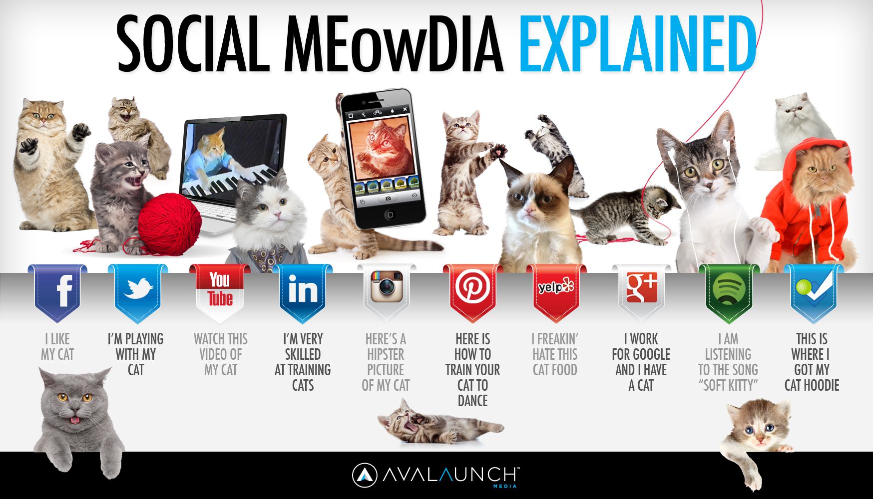 social media spiegato dai gatti